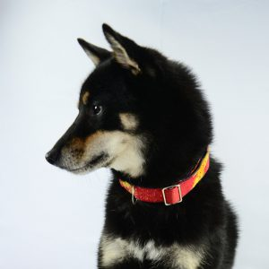 Fair Trade dog collar made with recycled materials. Suitable dog collar for medium size dogs and large dogs.