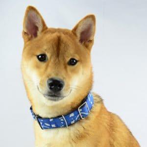 Indigo natural dye dog collar. Vegan friendly.