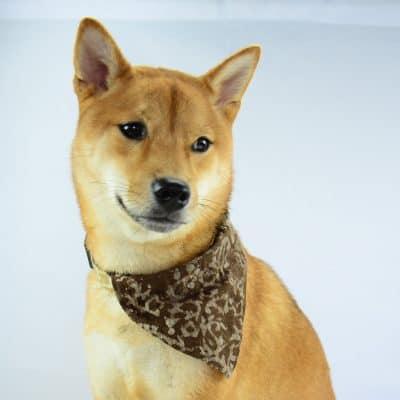 Dog bandana on collar in natural dyes. Vegan friendly.